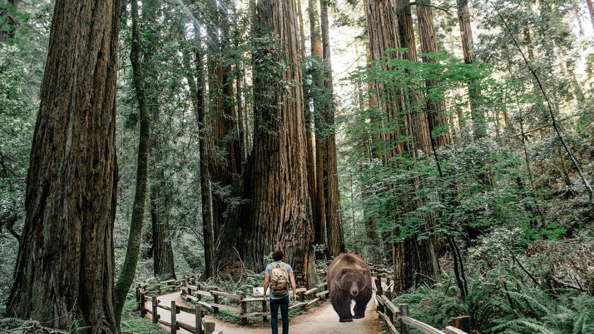 Redwood National and State Parks Trail Safety Redwoods