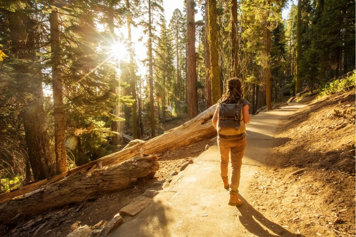 The Coastal Trail Redwoods