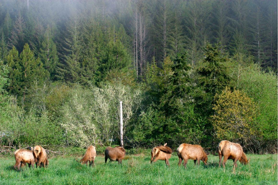 The Dolason Prairie Trail Redwoods