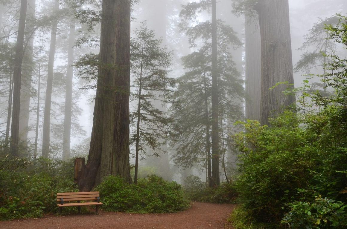 The Ladybird Johnson Grove Nature Trail Redwoods