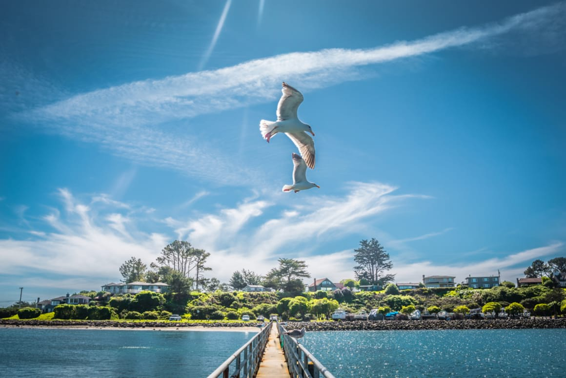 Things to See and Do in Bodega Bay Town