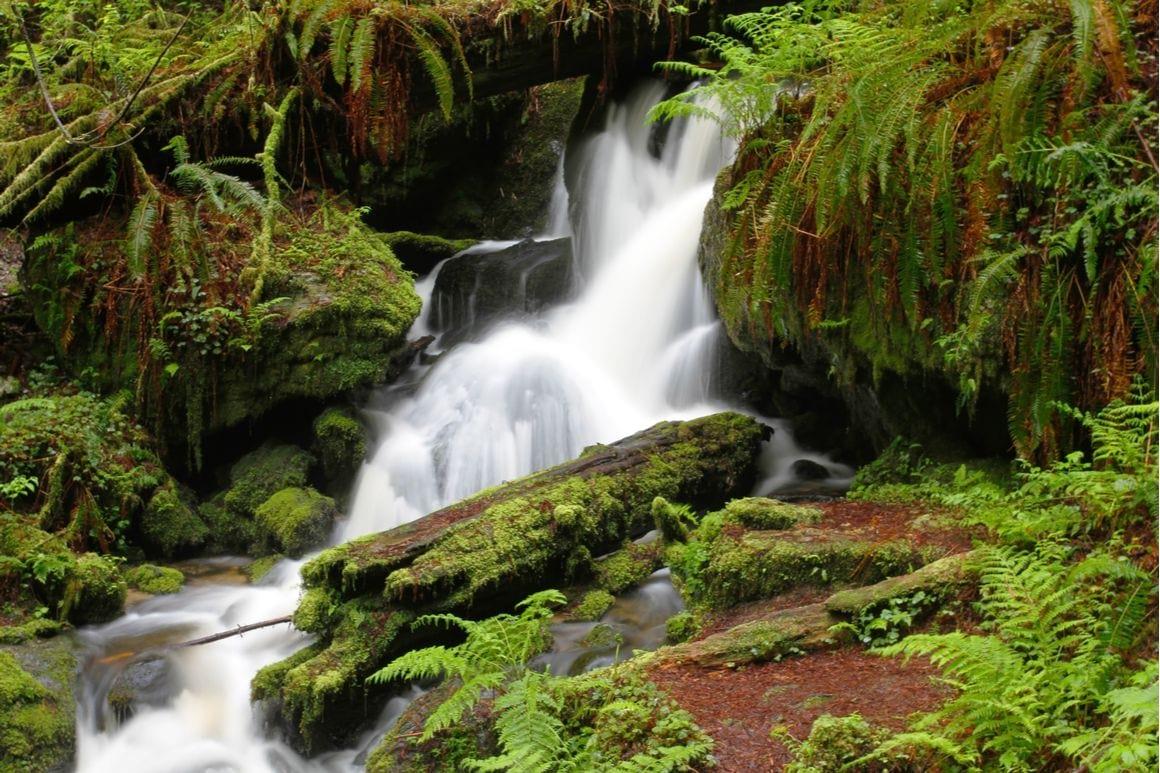 Trillium Falls Trail Redwoods