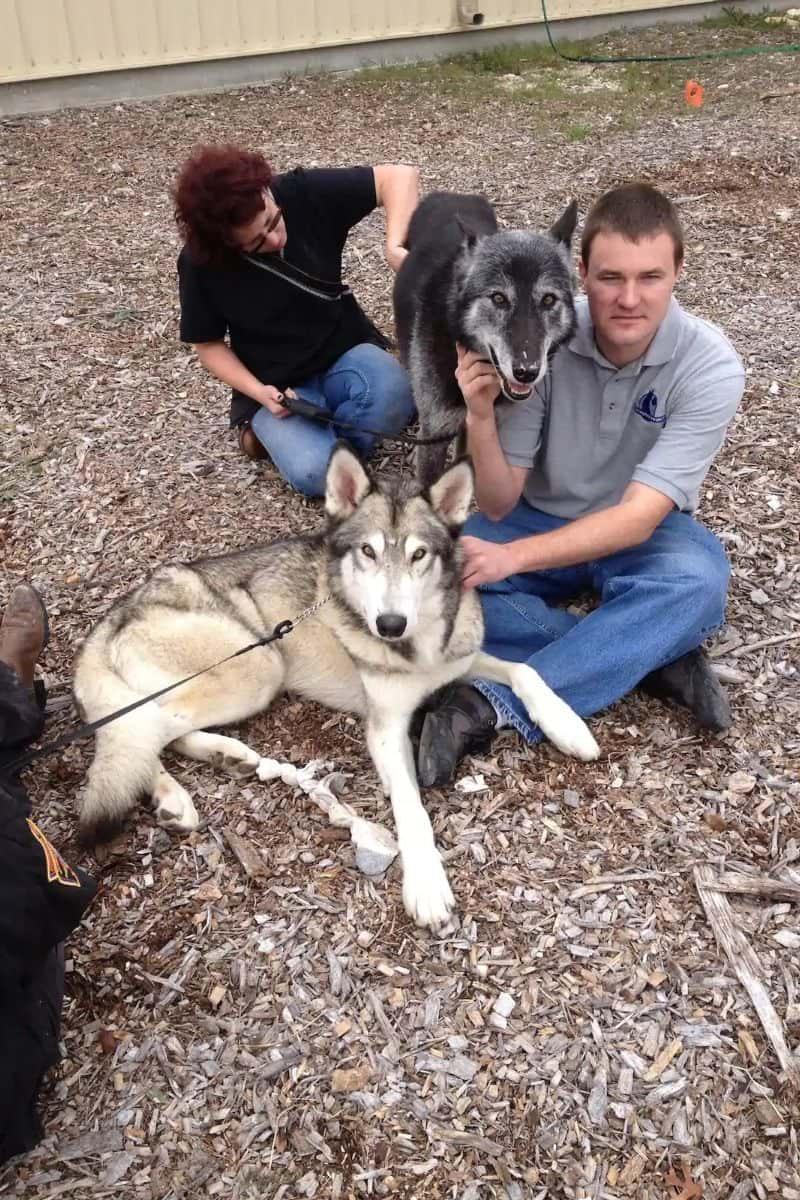 Texas Wolfdog Experience, Houston