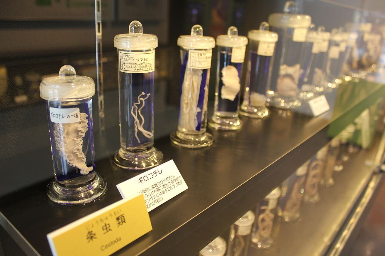 An exhibit at the Meguro Parasitological Museum - unusual things to do in Japan