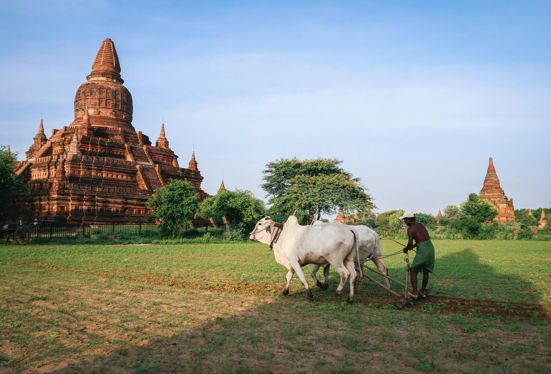 A farmer in Bagan works a field near an old temple