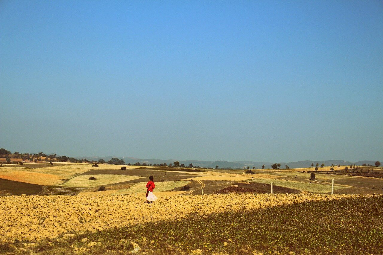 A traveller in Myanmar walks through a field of sunflowers in Shan State