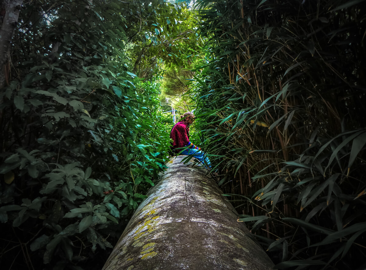 A man backpacking New Zealand sitting in a forest in Wellington