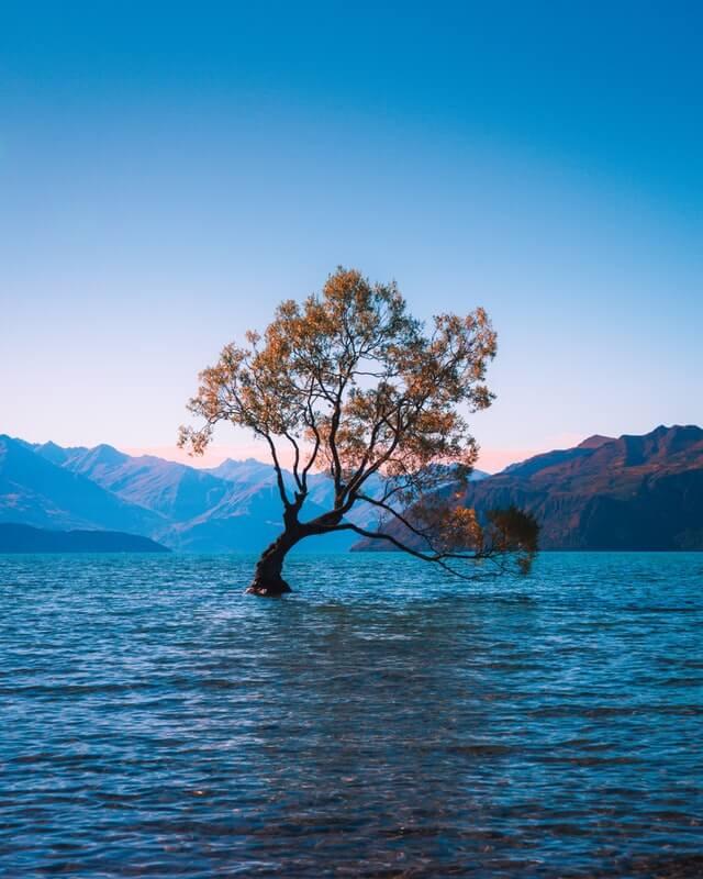 The famous Wanaka tree - popular photo spot on South Island