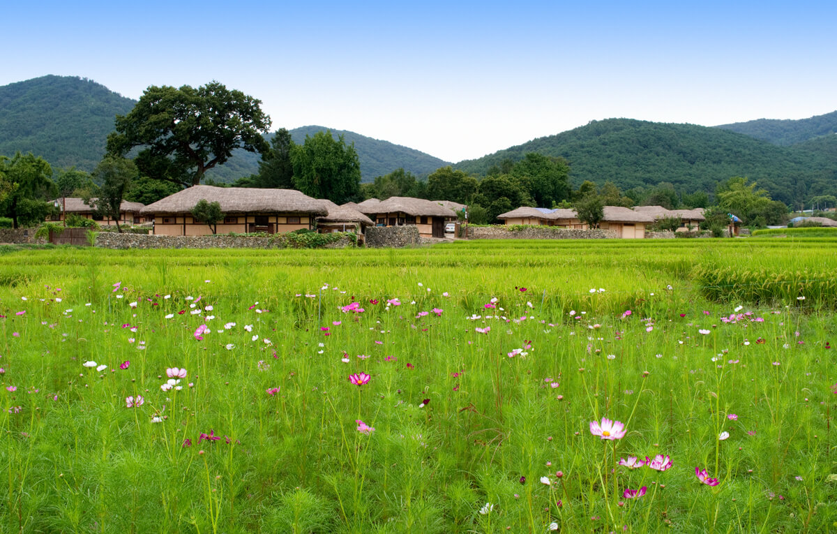 A rice paddy field at a traditional folk village in South Korea