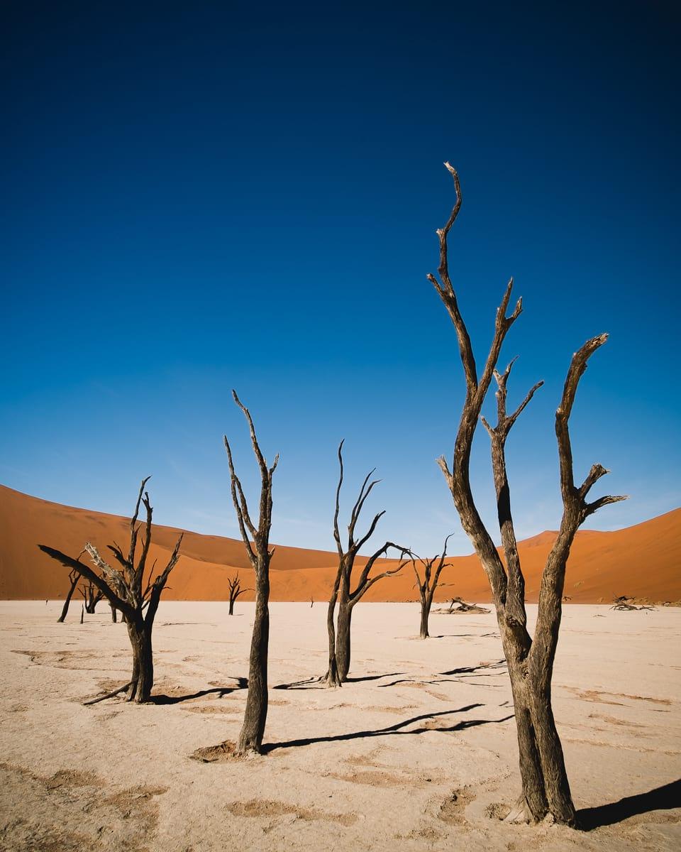 deadvlei in namib desert