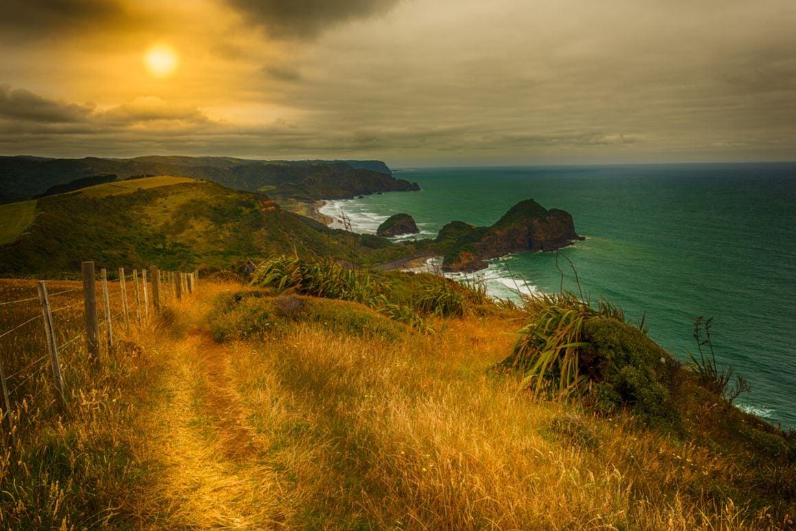 Te Henga Walkway, New Zealand