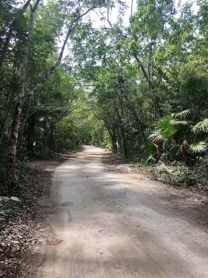 Bikes Cenotes Jungle and Lunch Experience