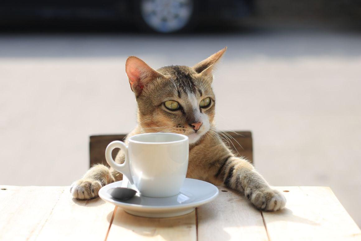Feel-Good Coffee