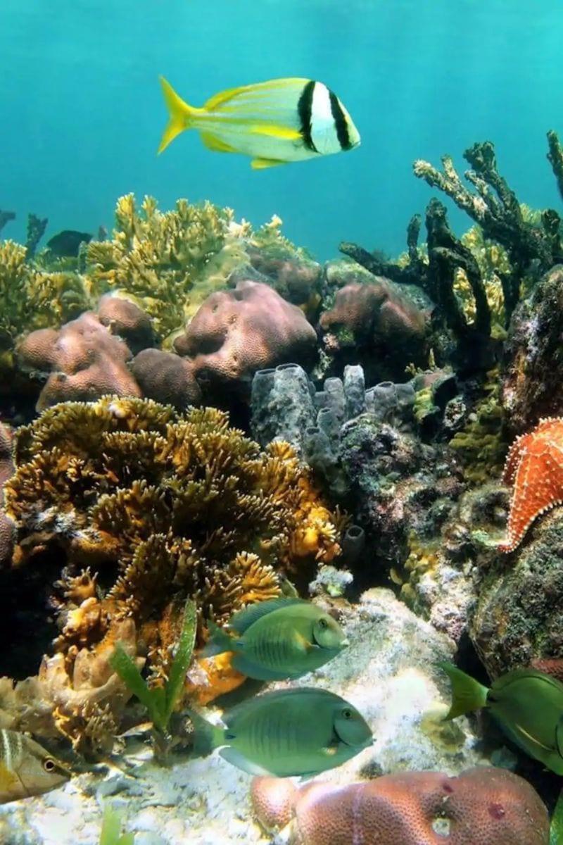 Snorkelling at Mangel Halto Aruba