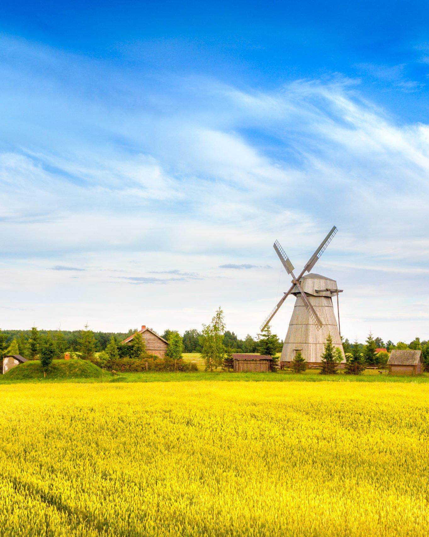 golden fields in belarus