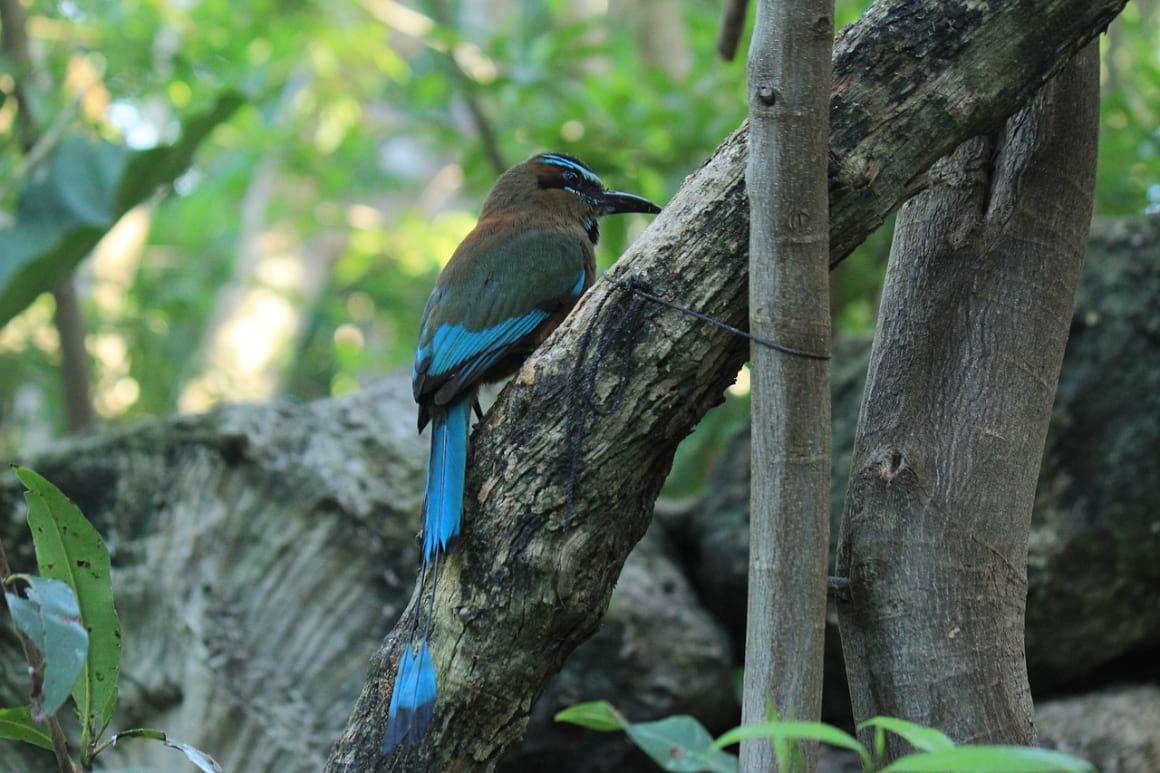 Bird Watching Cancun