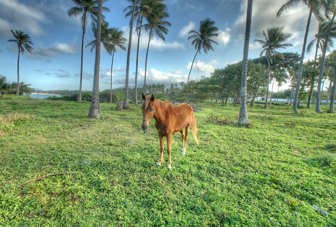 Horseback Cancun