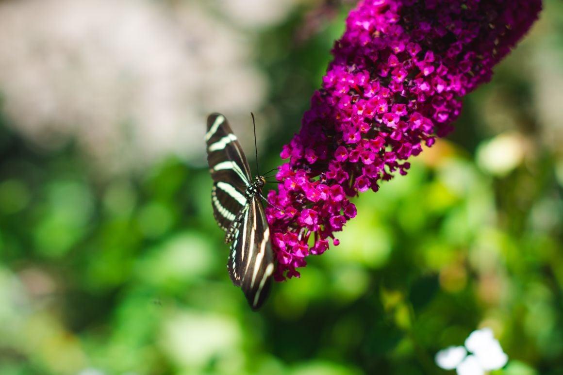 Garden at the Santa Barbara Museum of Natural History