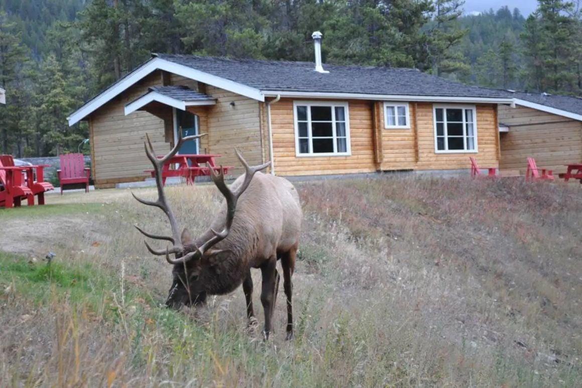Riverside Family Suite, Jasper National Park 1