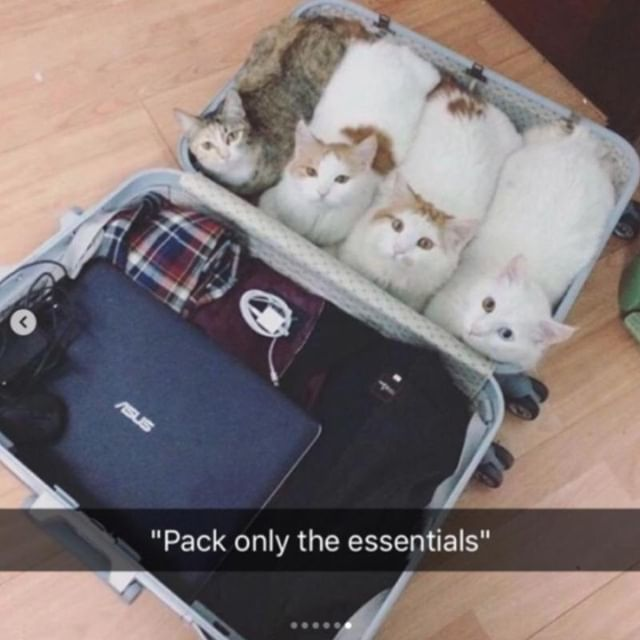 kittens in a suitcase when packing for a backpacking trip