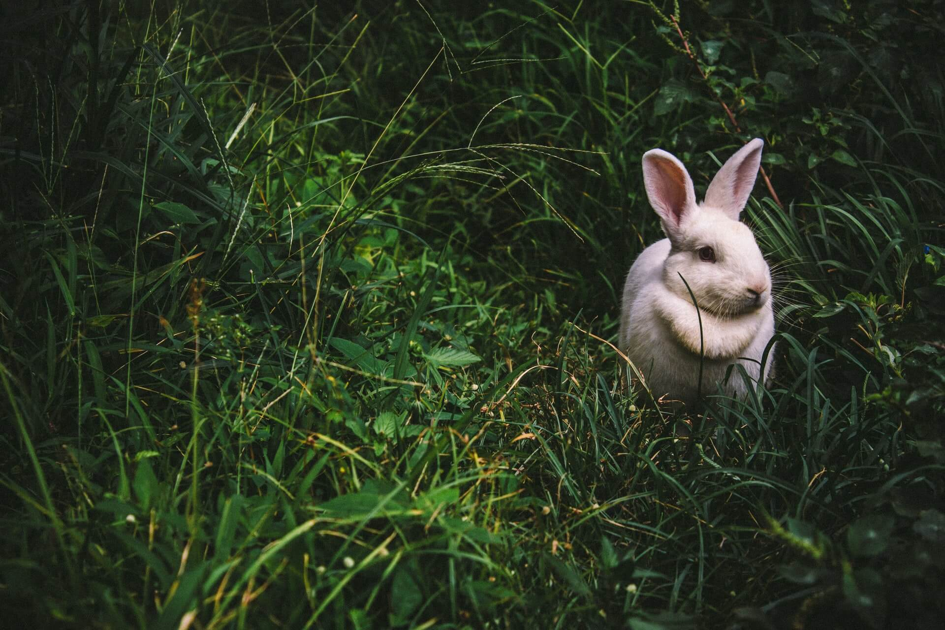 A white rabbit in the grass symbolising the psychedelic journey for people taking acid for the first time