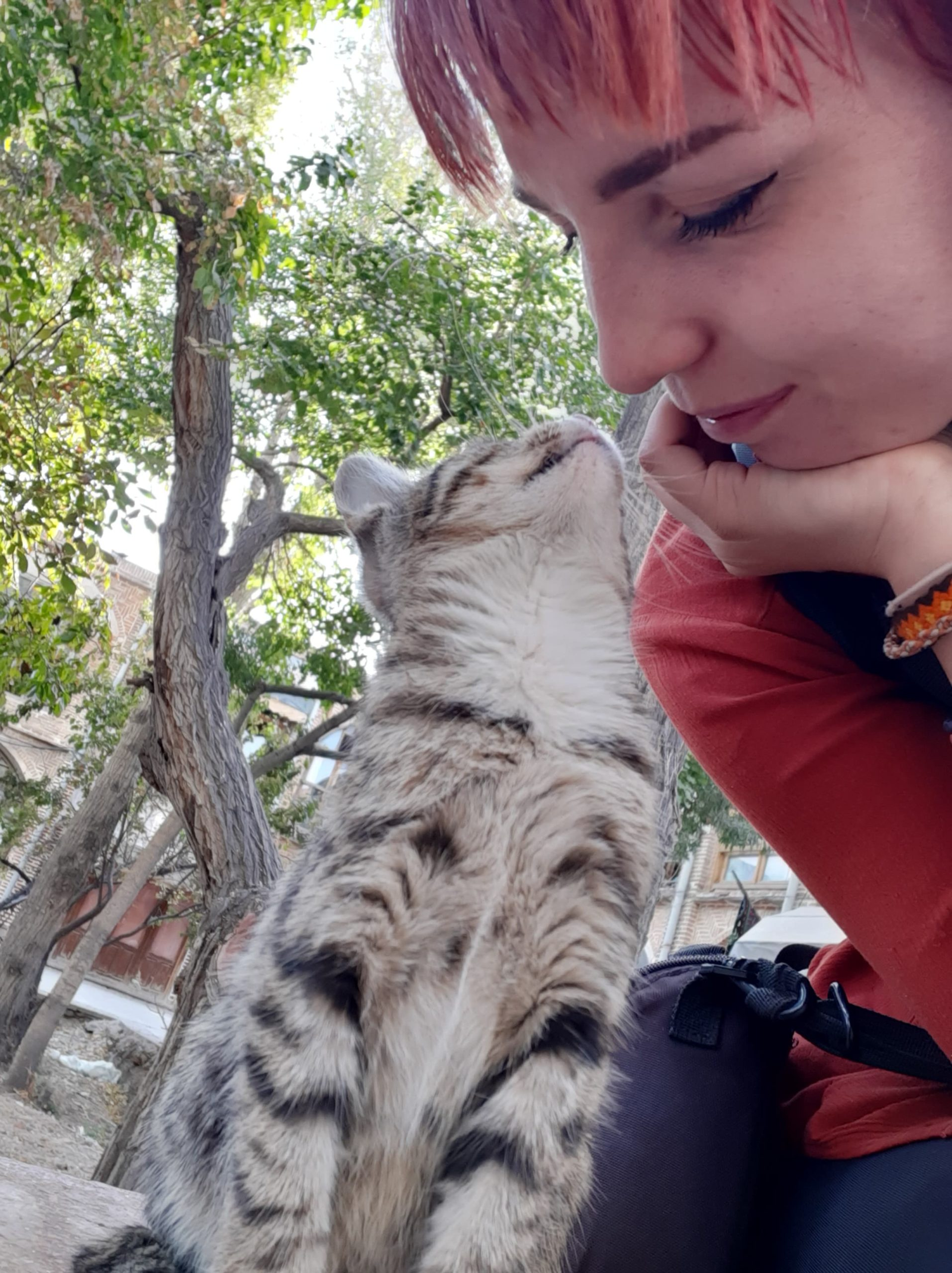 Sustainabe traveller plays with a cute cat at an eco backpackers hostel in Iran
