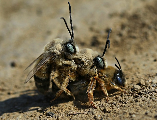 Three bees on top of each other