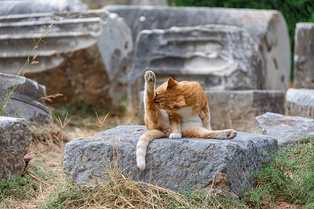 Cat sitting on a rock licking his leg.