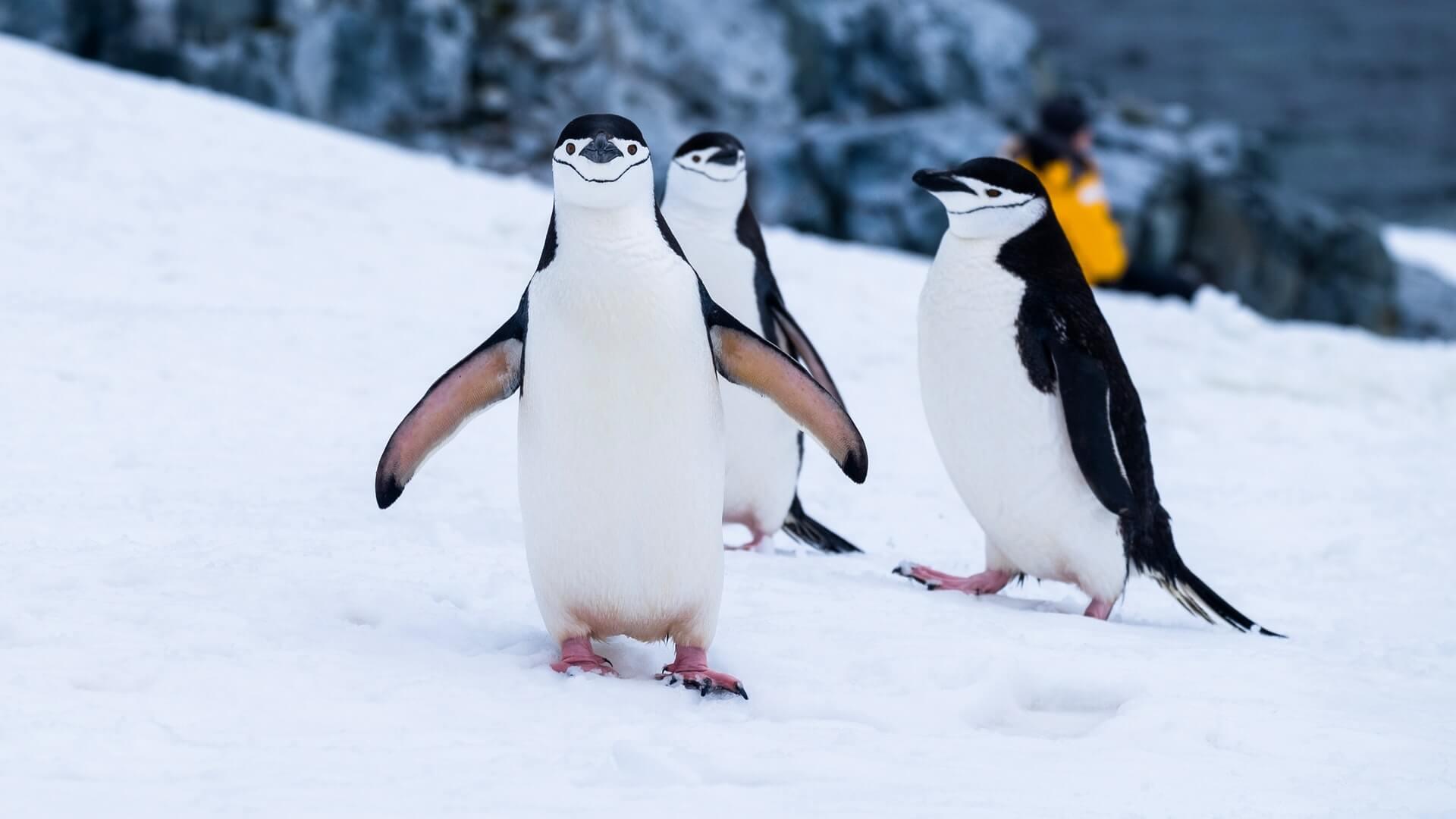 two penguins in Antarctica - bucket list trips