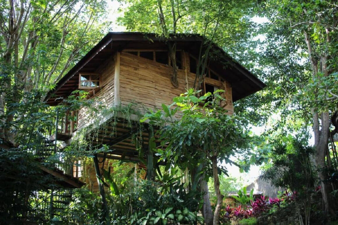Roots Tree House