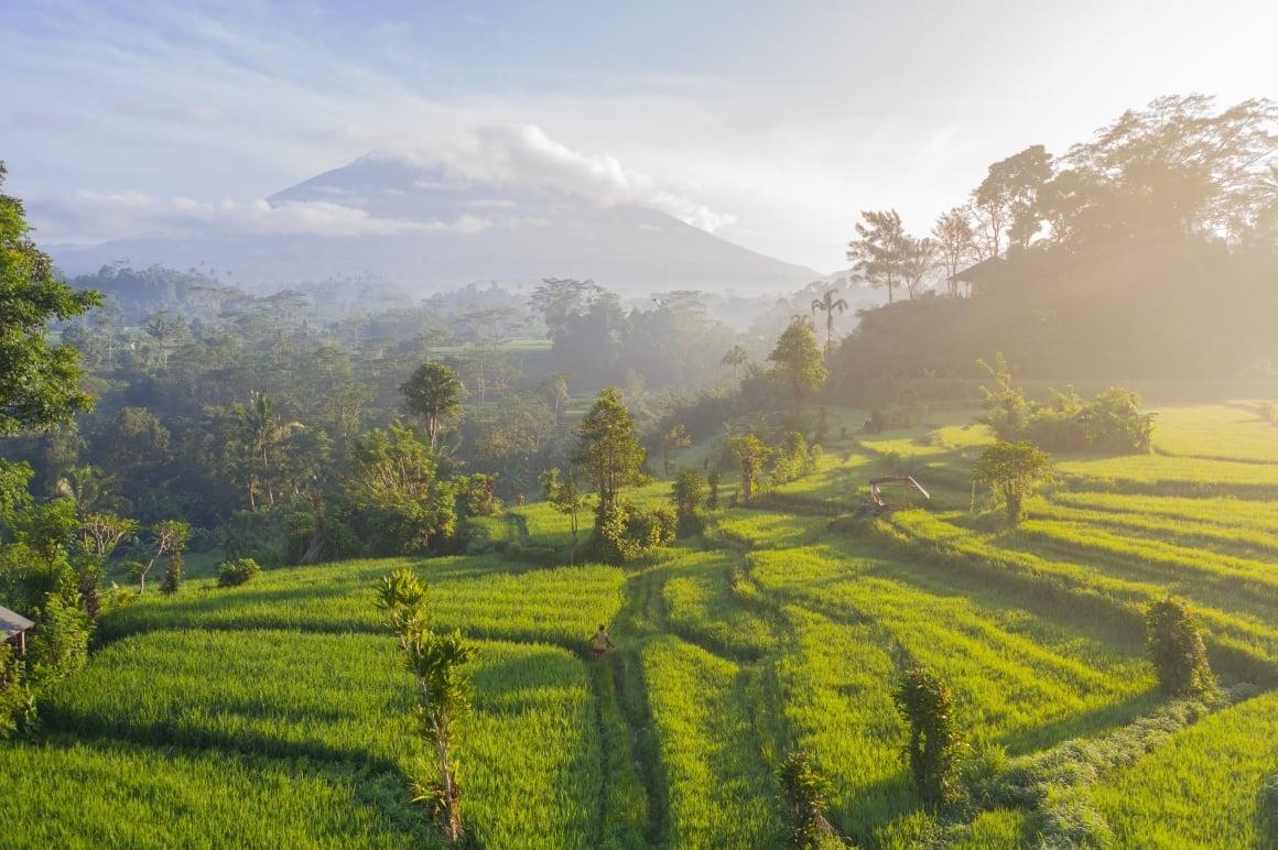 Before You Volunteer in Bali