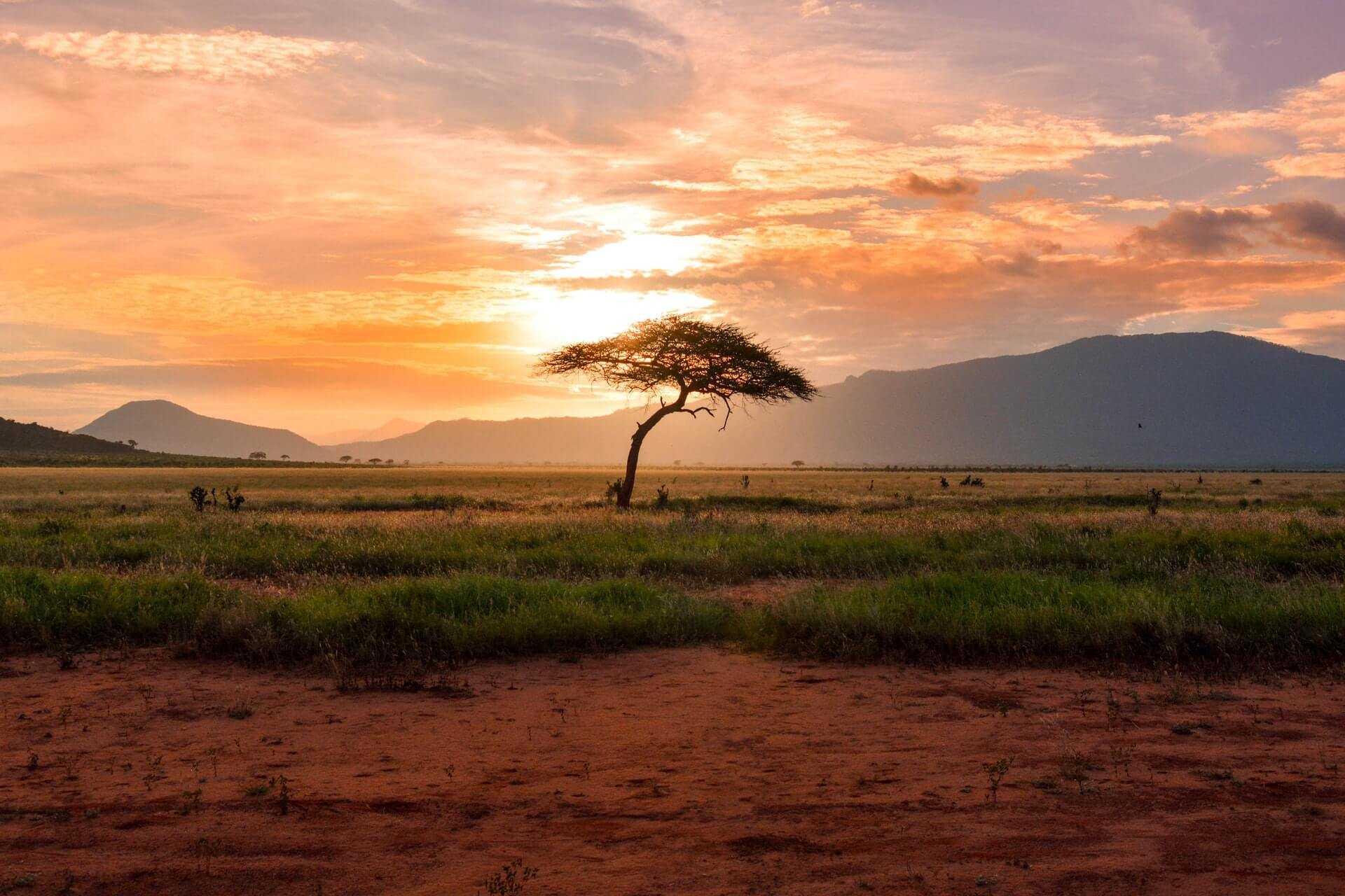 A lone tree photographed at sunset by a volunteer travelling Kenya