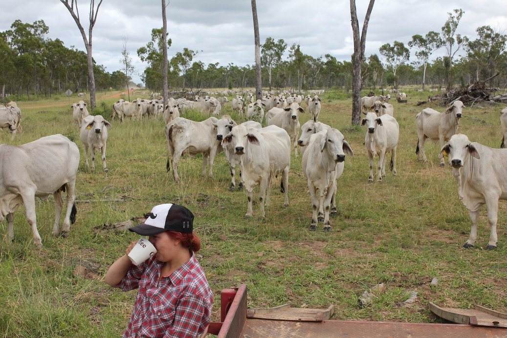 Elina drinking coffee in front of cows
