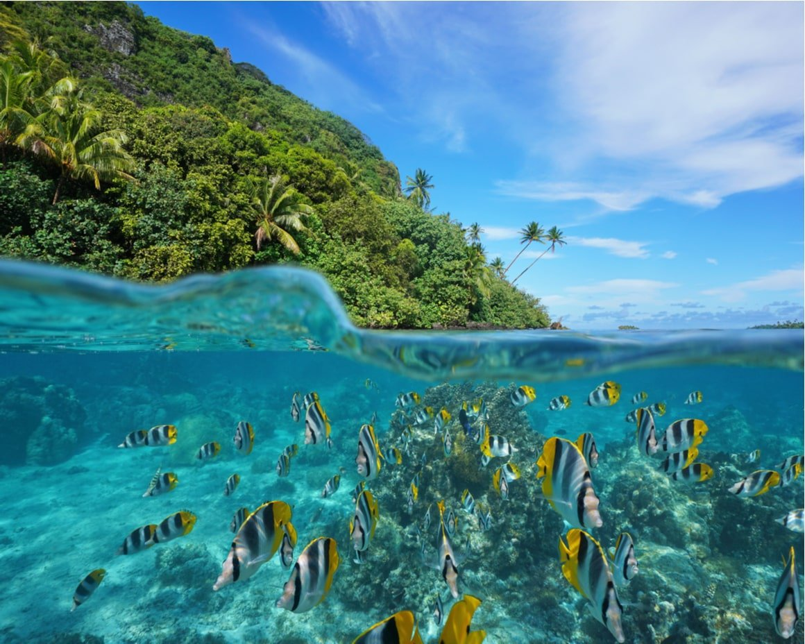 Lots of fish and a reef under clear blue water with French Polynesian islands above water.