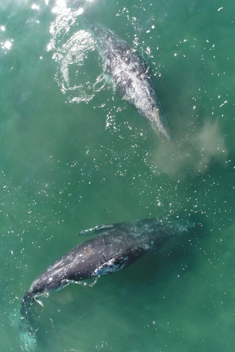 Kayaking with whales Malibu