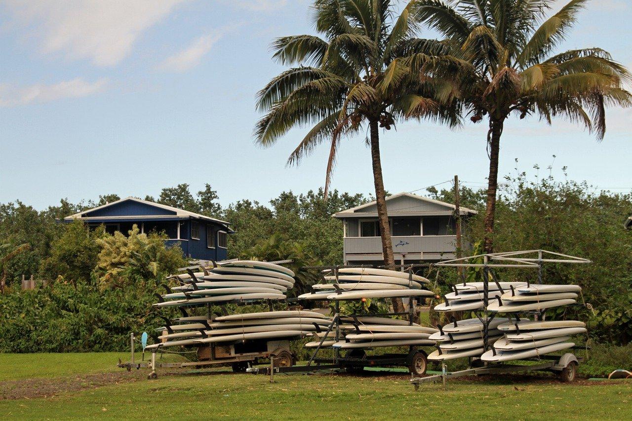 Palm Tree Kauai