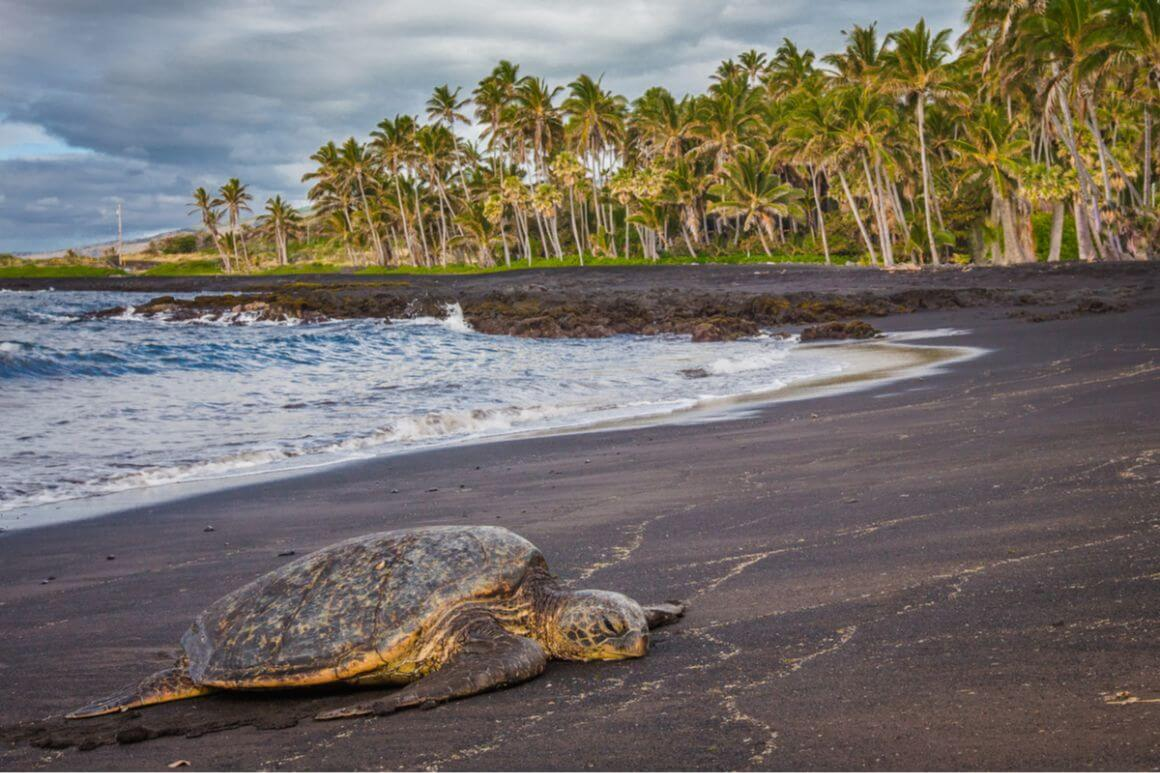 Punalu u Beach The Big Island Hawaii