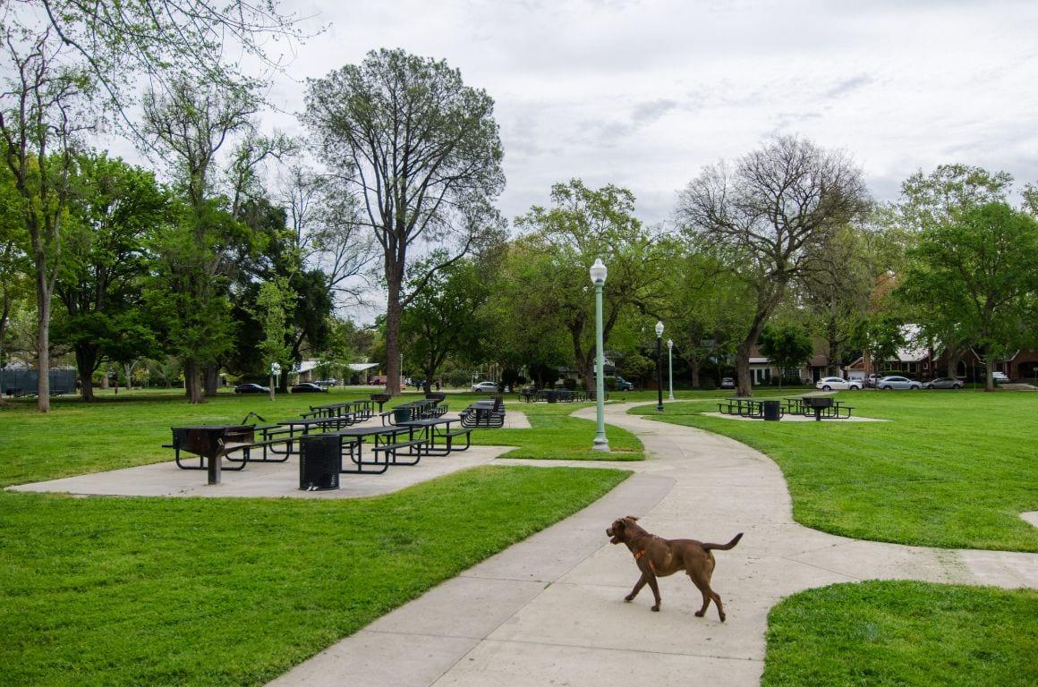 East Sacramento Mckinly Park