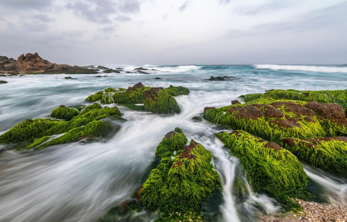 green, mossy rocks in the ocean in salalah oman
