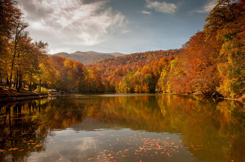 forest with autumn colours reflected on a lake