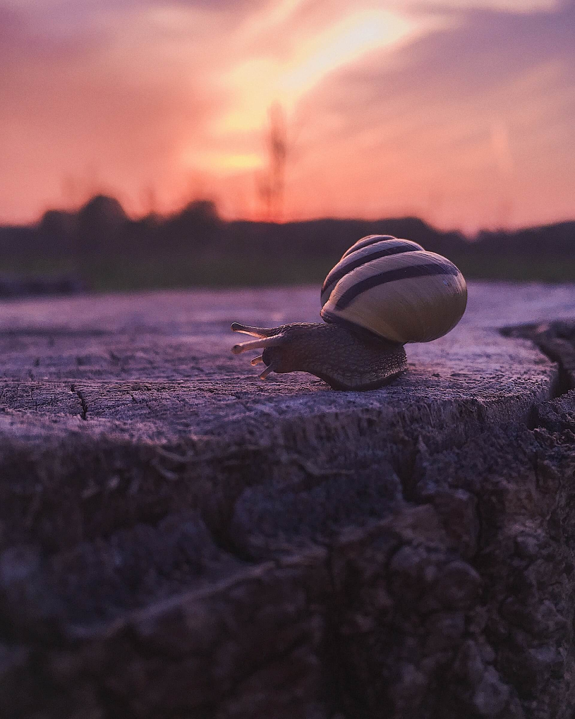 A snail and sunset representing the pace of life needed to combat travel fatigue