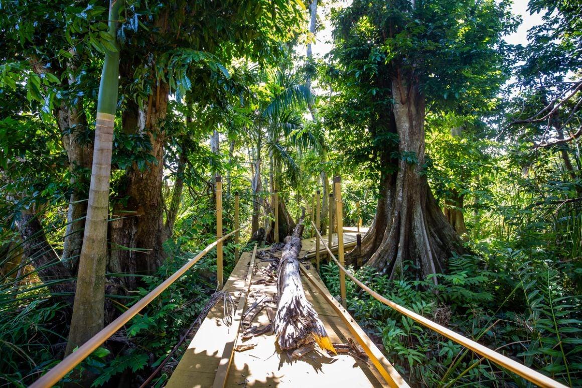 Pterocarpus Forest