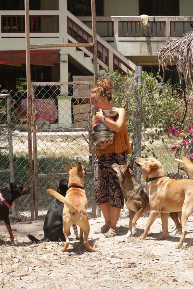 Help in a Dog and Cat Sanctuary in Thailand