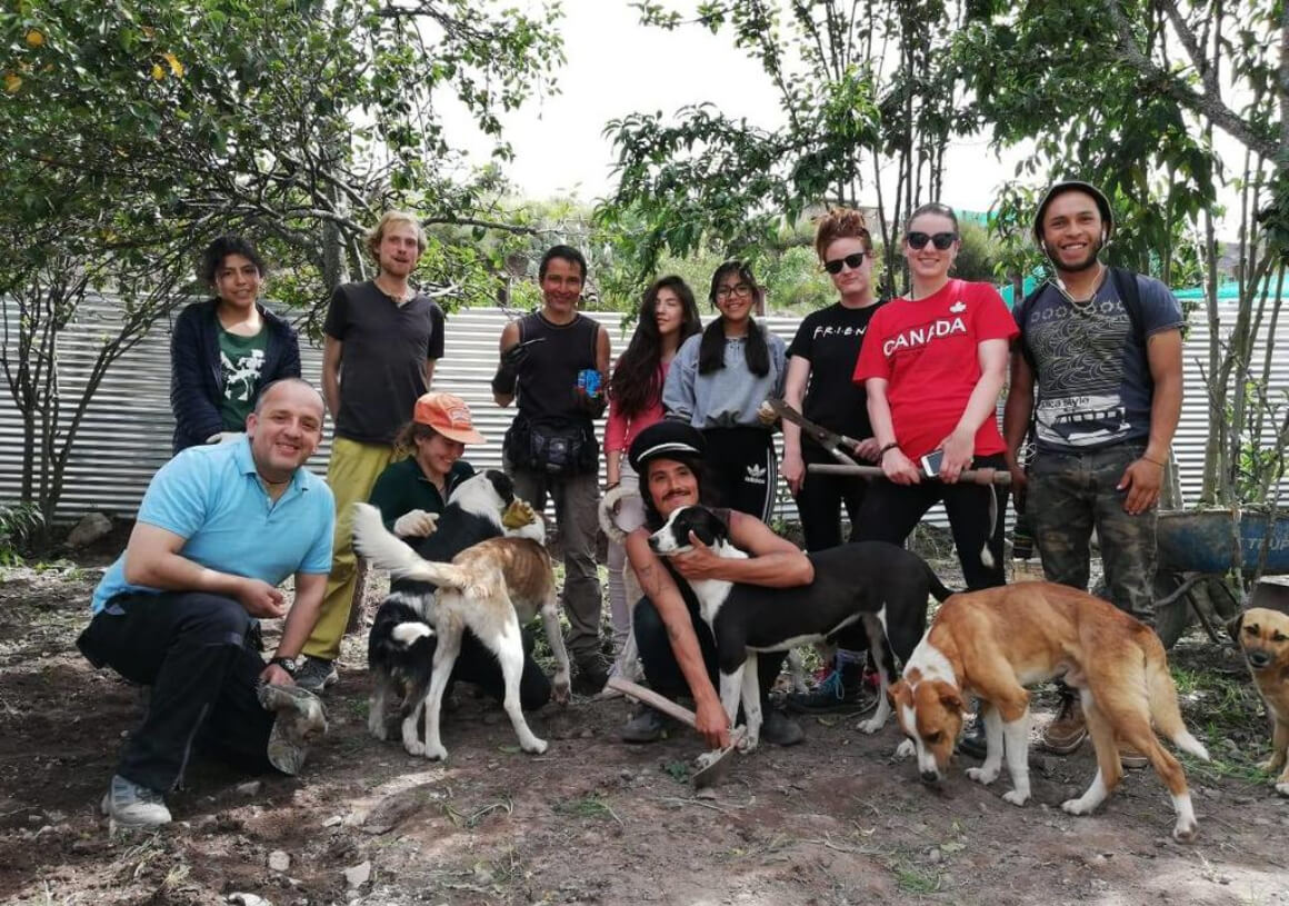 Help in a Stray Dog Rescue Centre